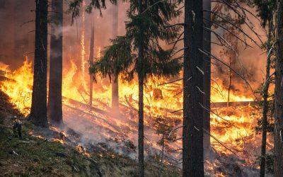 Verordnung Waldbrandgefahr Verbot des Feuerentzündens